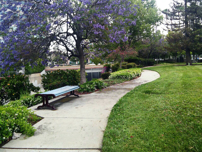 #dpcwalkinthepark #park #walking #walkinthepark #glendale #california #nature #photography #spring #freetoedit #dpcbenches