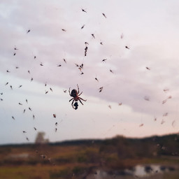 spider dinnertime dinnerparty freetoedit