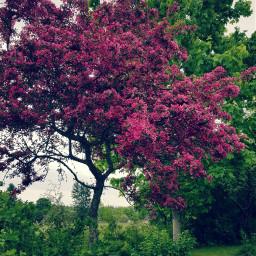 tree appletree pinktree