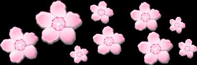 flower flowers pink pinkflowers cute