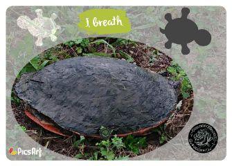 shapemask turtle wildlife nature shell