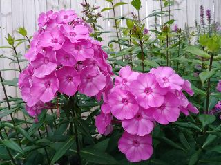 inbloom flowers colorful natural freetoedit