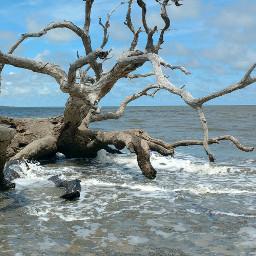 driftwood beach ocean atlantic beachdays freetoedit
