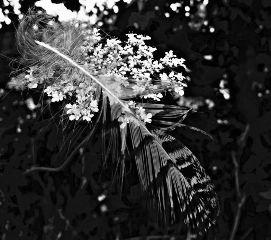 feather blackandwhite flower