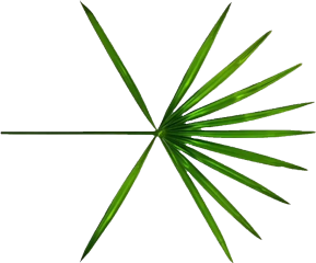 exo logo new thewar kokobop