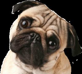 dogs freetoedit