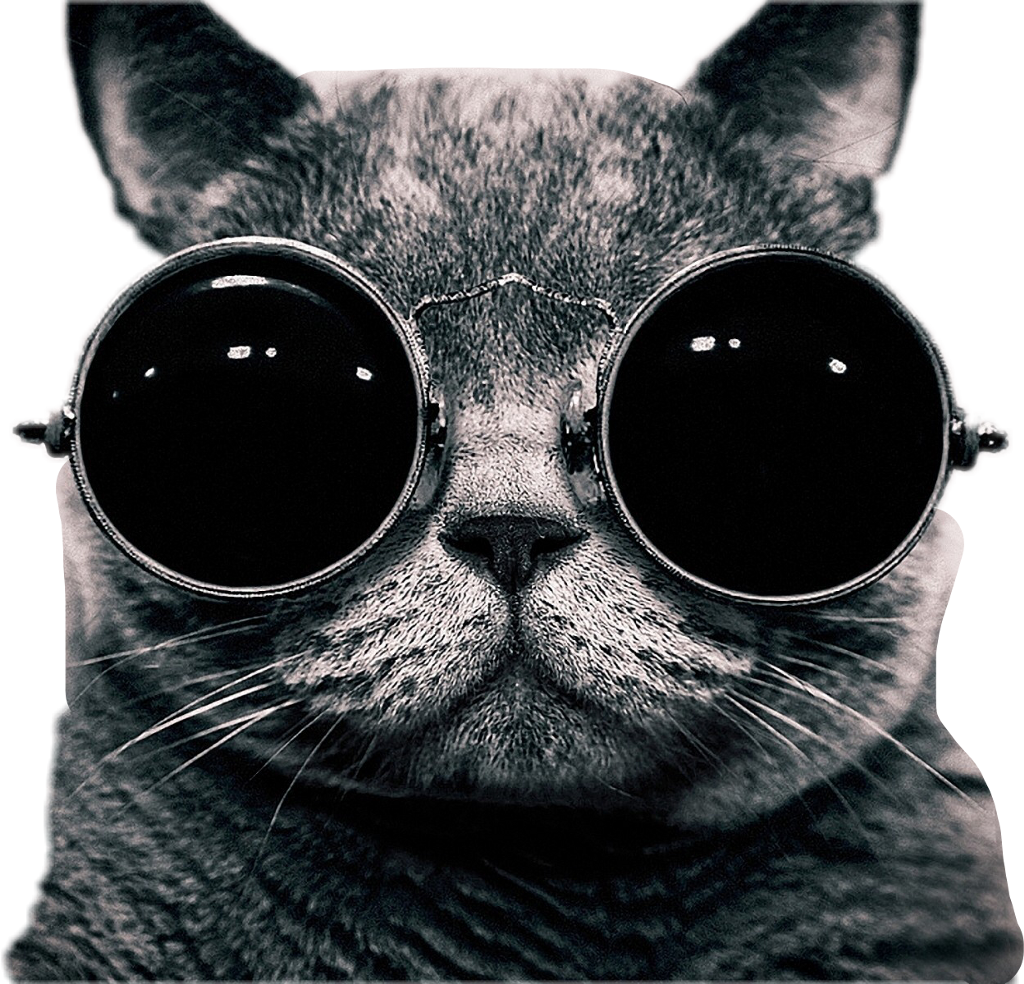 #catlove #freetoedit
