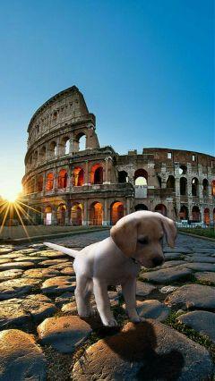 freetoedit dog puppy cucciolo cane