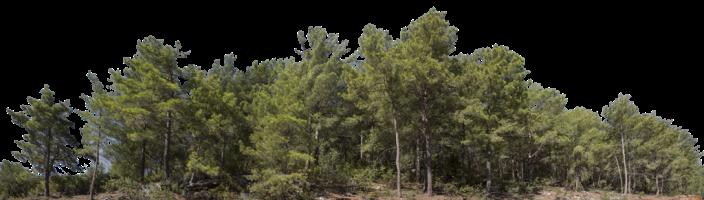 лес freetoedit
