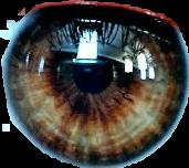 eyes ojo ojos verde freetoedit