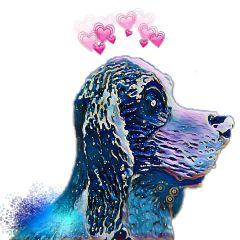 freetoedit dog cute colorful love😊