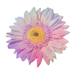 flower flores pink tumblr stickers