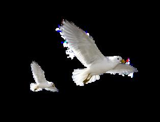 birds freetoedit