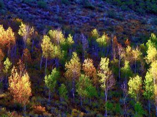 angeleyesimages landscape autumn autumncolors tree