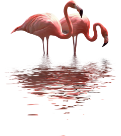 flamingo ftestickers bird freetoedit