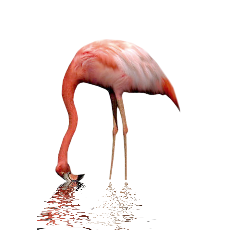 ftestickers flamingo freetoedit