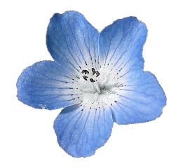 flor blue tumblr freetoedit