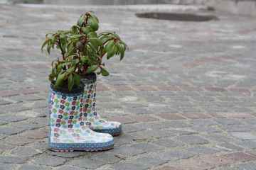freetoedit flower nature shoes