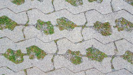 walk way stones ornaments moss