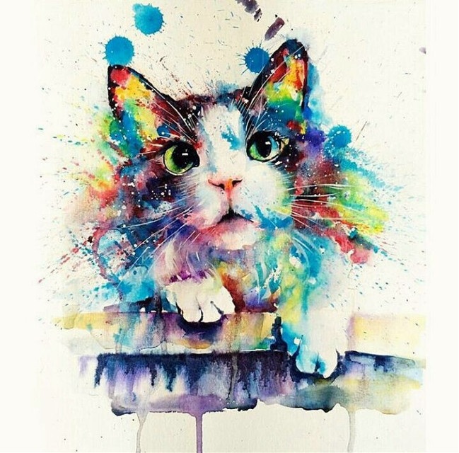 #rainbow #cat