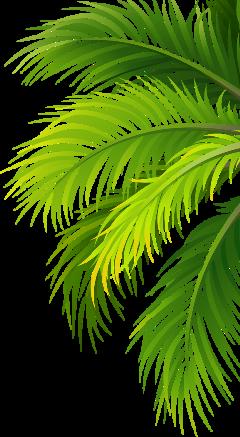 palmtree palmleaves ftestickers freetoedit