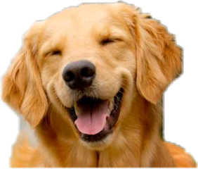 cachorro freetoedit