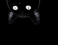 png edit overlay tumblr cat
