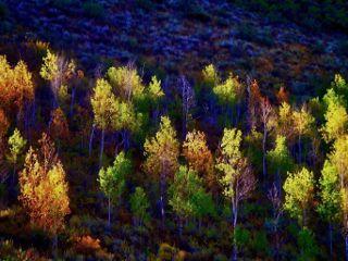 angeleyesimages landscape nature landscpephotography naturephotography freetoedit