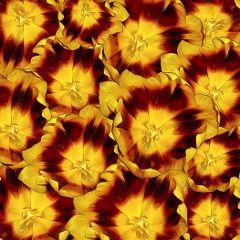 flowers bunch summer