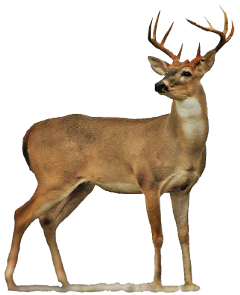 sticker stickers deer freetoedit