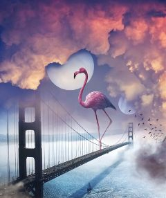 freetoedit flamingo bridge ocean clouds