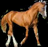 horse konik freetoedit