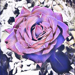 rose frommygarden loveit freetoedit