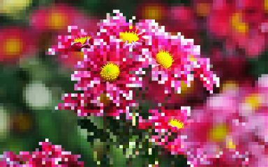 pixelate summer photography nature flower