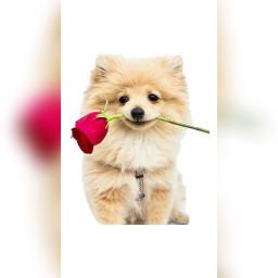 freetoedit adorable animals puppies