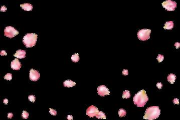 petalos sakura flordecerezo sakuratree freetoedit