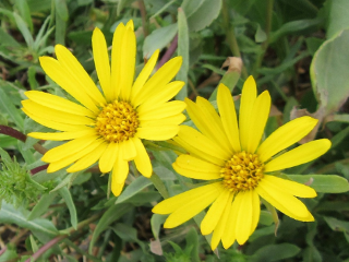 yellow flowers freetoedit