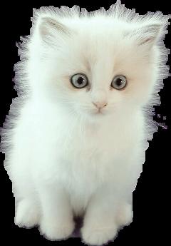 cute kitty adorable freetoedit