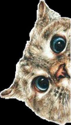 cat gato blueeyes ojosazules grunge freetoedit