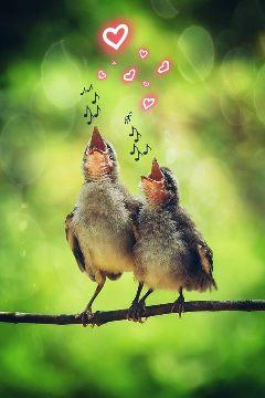 freetoedit birdsong lovely loveisinside musicislove