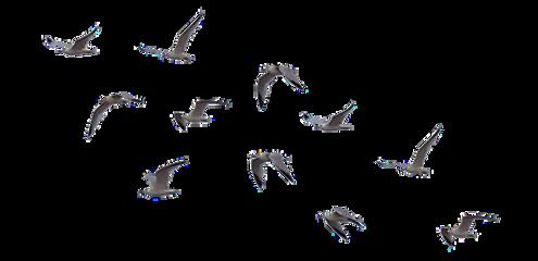 ftstickers birds freetoedit