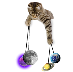 cat moon earth planets universe