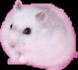 hamsterbysya freetoedit