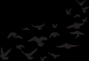 pajaros palomas aves negro freetoedit