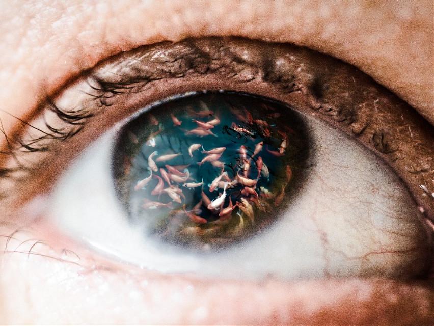 #doubleexposure #eye #redfish #koi #fish