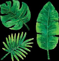 leafs freetoedit