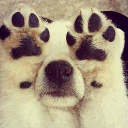 freetoedit baby dogs dogselfie dogsfriend