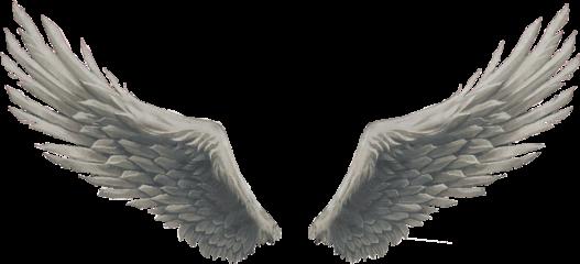 angel wings god freetoedit