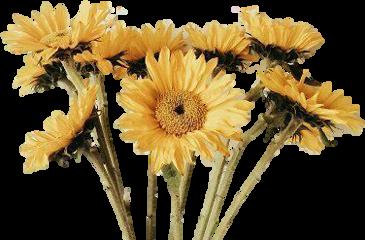flowers flores recurso overlay freetoedit