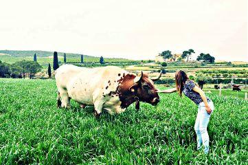 risk landscape cow green summer freetoedit